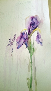 unfinished irises and lavenders