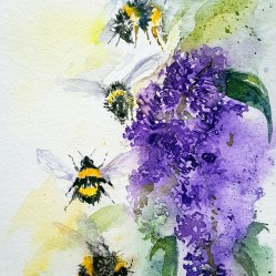 JT248 - Four bees and buddleia - Copy